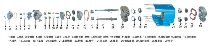 转子泵结构图